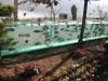 aquarium-fence-2