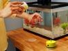 Matey Fish Feeder by MichaelS