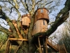 Multi-level Treehouse