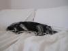pet-pillow