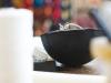 bowl-chair