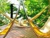 trinity-hammock