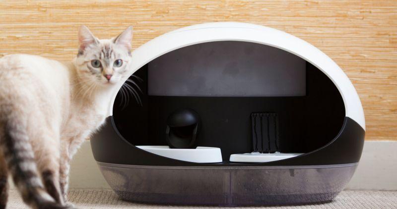 Catspad smart cat feeder identifies your cat to deliver food