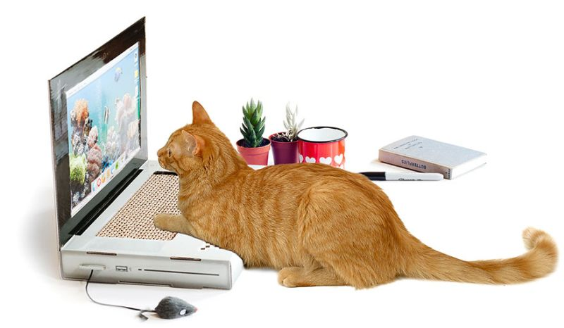 scratching laptop for cat