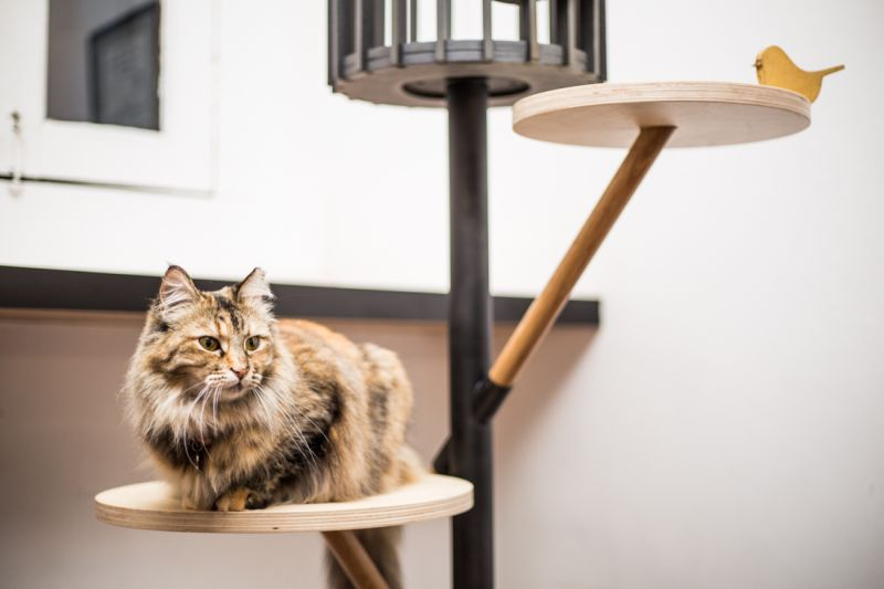 9lives is first ever cat furniture design show at Design Week Singapore
