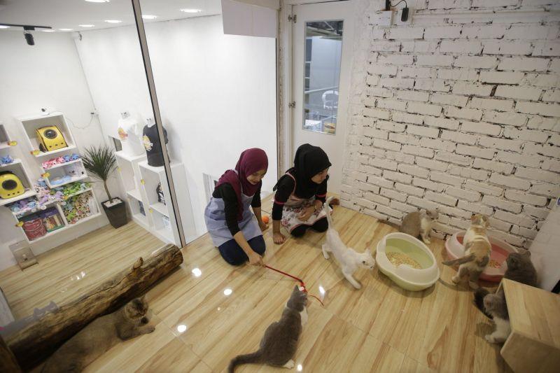 Luxury cat hotel - HomeCrux