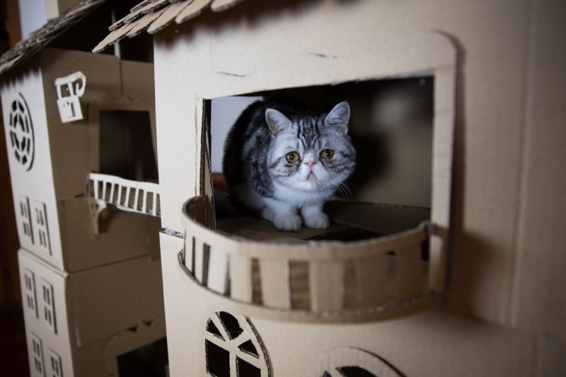 Dog Ramp For Bed >> A woman builds one heck of a cardboard palace for her cat