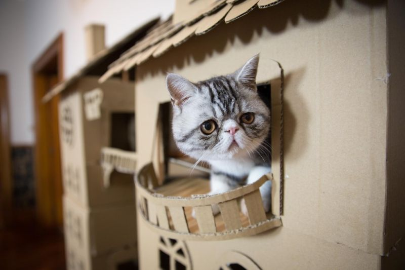 a woman builds one heck of a cardboard palace for her cat