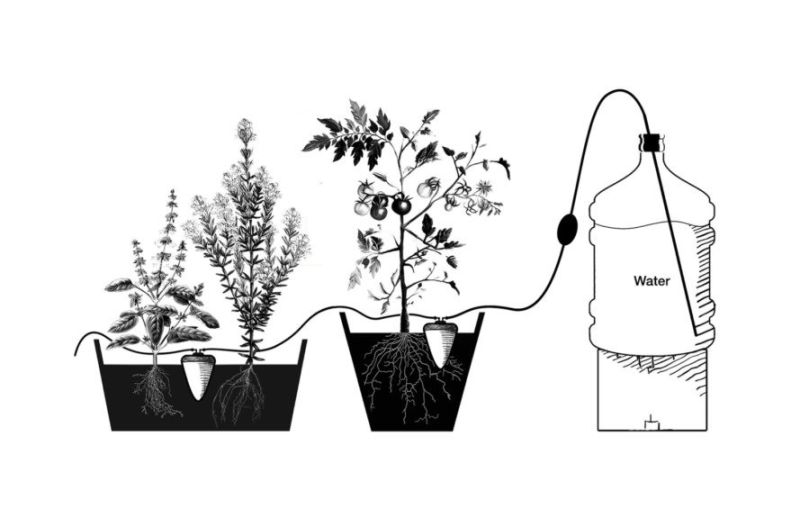 http://inhabitat.com/artisanal-clay-pots-from-egypt-can-water-your-plants-for-up-to-a-month/