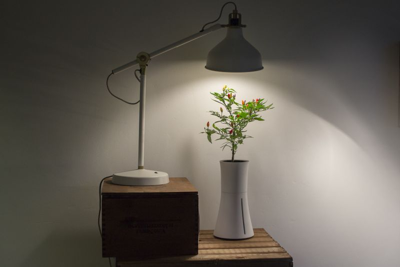 Botanium takes care of the plant for you