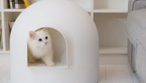 Kitten won t use litter box