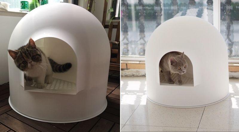 Award-winning Igloo cat litter box by Pidan studio