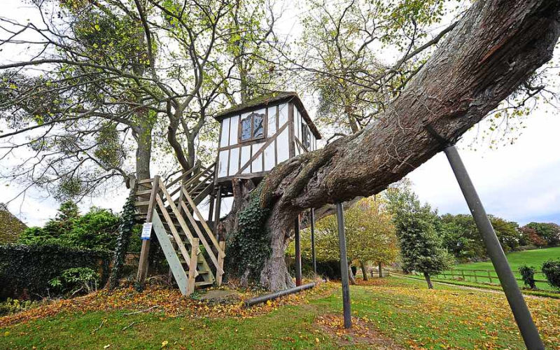 World's oldest treehouse in Pitchford imbibes Queen Victoria's childhood memories