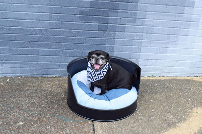 Metal oil drum dog bed