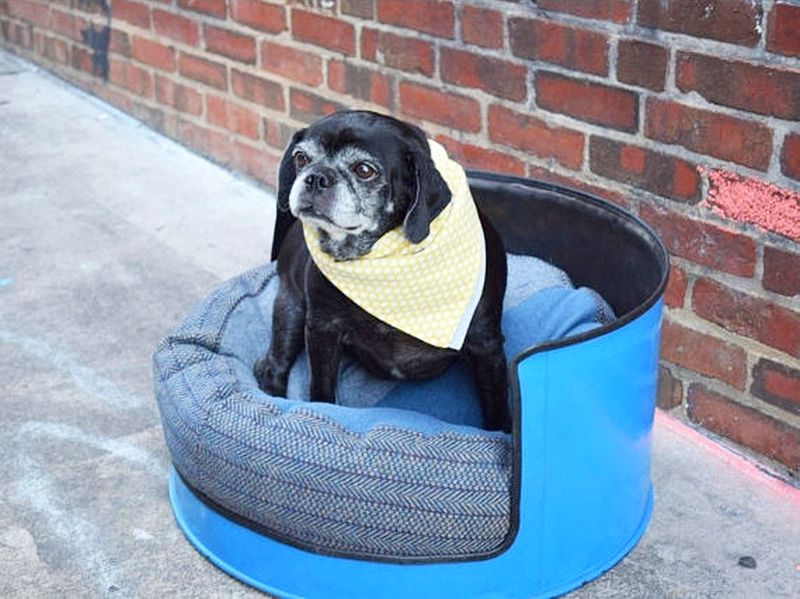 Blue-colored metal oil drum dog furniture