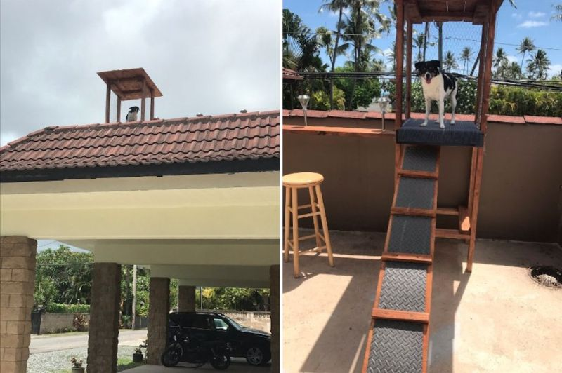 Rooftop Lookout Perch for Dog in Hawaii