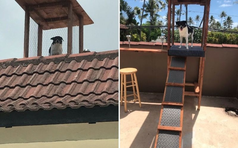 Curious dog gets rooftop lookout perch to keep an eye on everyone