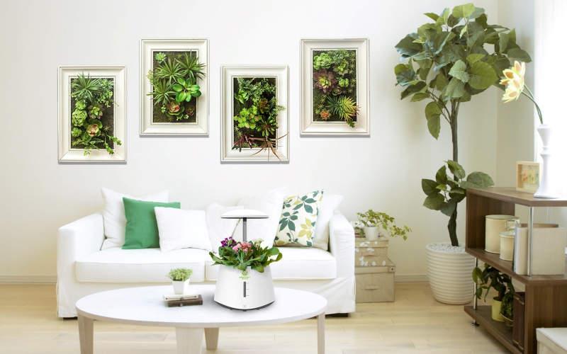 Zhejiang Nashou's smart garden purifies indoor air