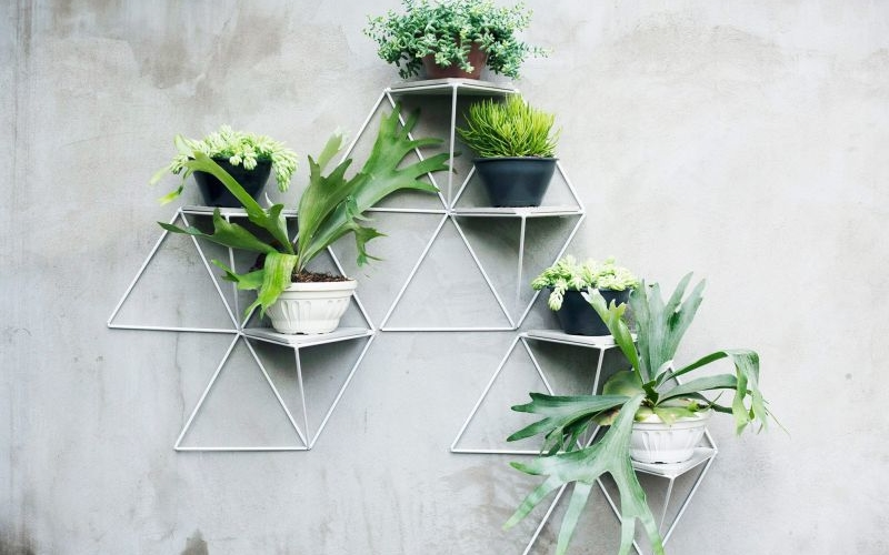 3D wall plant mount