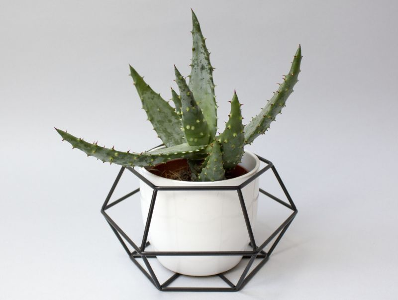 Geometric plant by Hexal Design