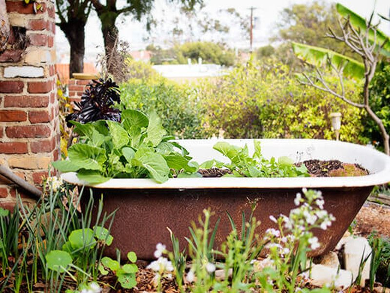 Old Bathtub are great cheap gardening containers