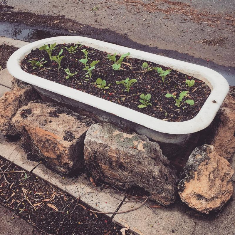 Old bathtub into garden planter