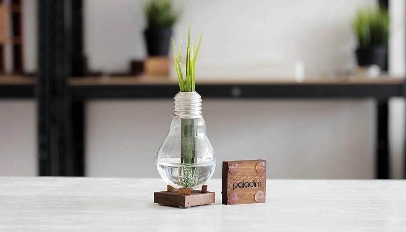 Bulb vase by Paladim