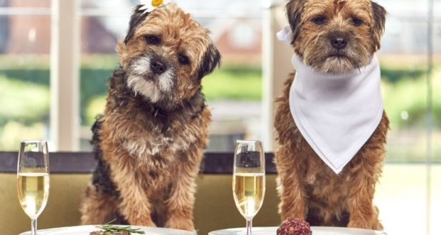 Mercure Hotels Happy Tails package for your pooch