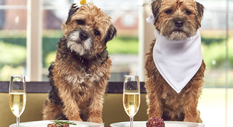 Mercure Hotels' dog-friendly retreat ensures your pet is never home alone