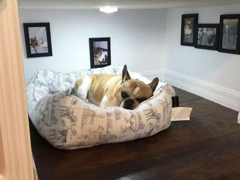 californian man builds a cute under stair bedroom for his dog - Flooring For Dog Room