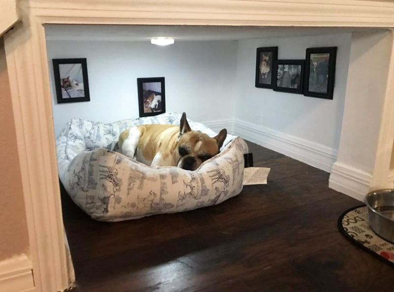 Dog apartment built by a Californian man