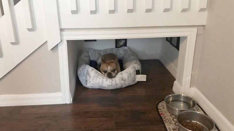 Californian man built a separate human-like room for his dog