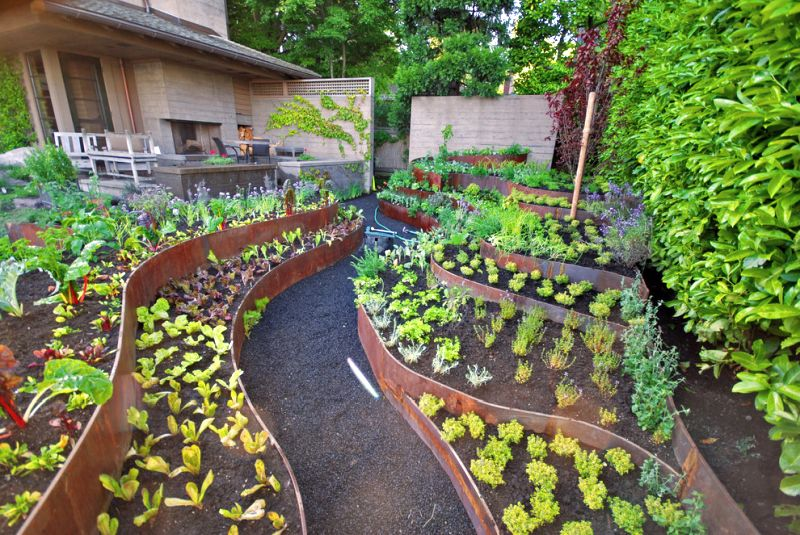 Vegetable garden backyard landscaping