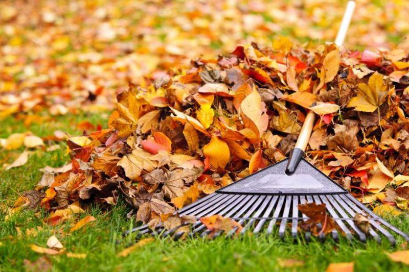 Clean Fallen leafs
