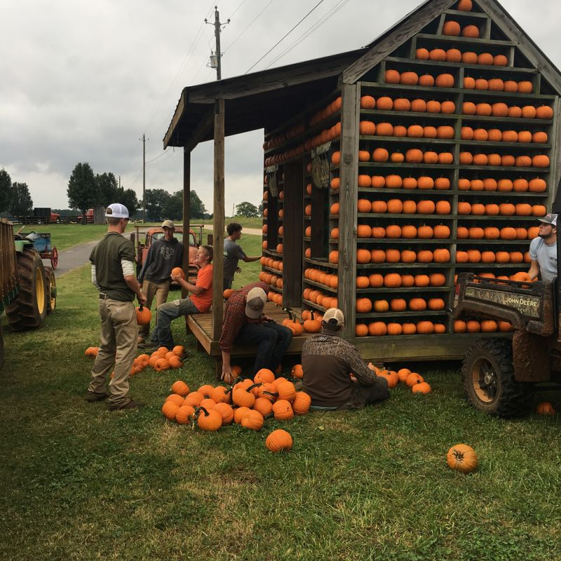 Build Pumpkin House