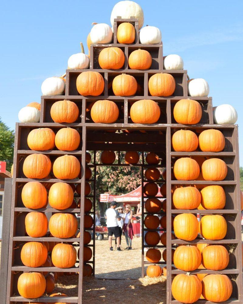 how to build Halloween Pumpkin house