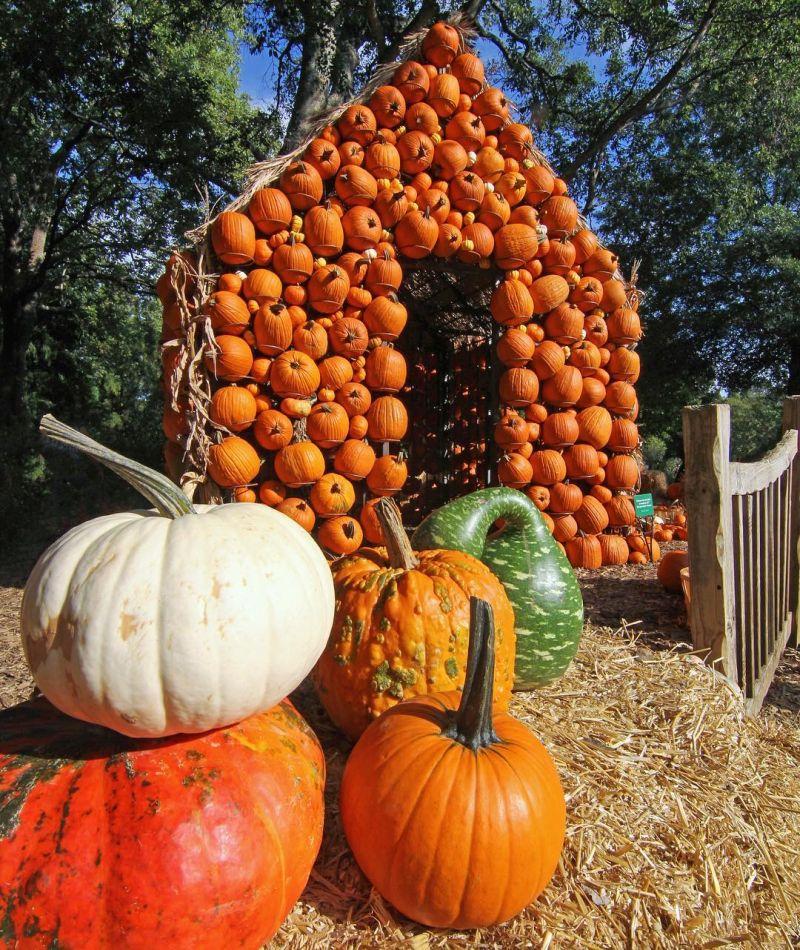 halloween pumpkin house by - photo #13