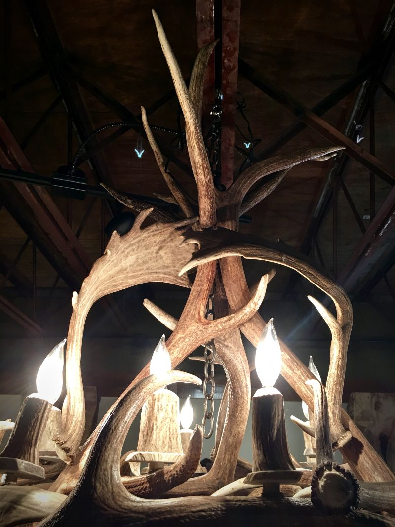 Kelly Maxwell's real antler chandelier
