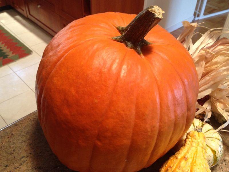 Select a fresh pumpkin with a stem