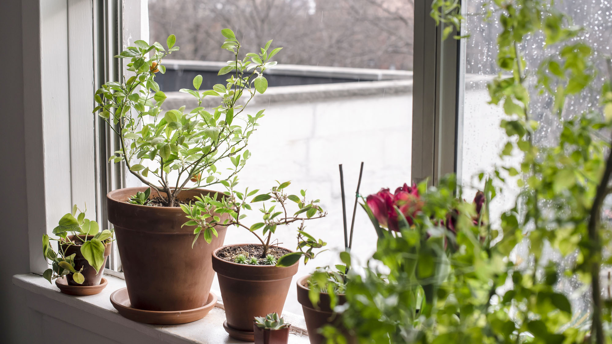 houseplants to purify indoor air