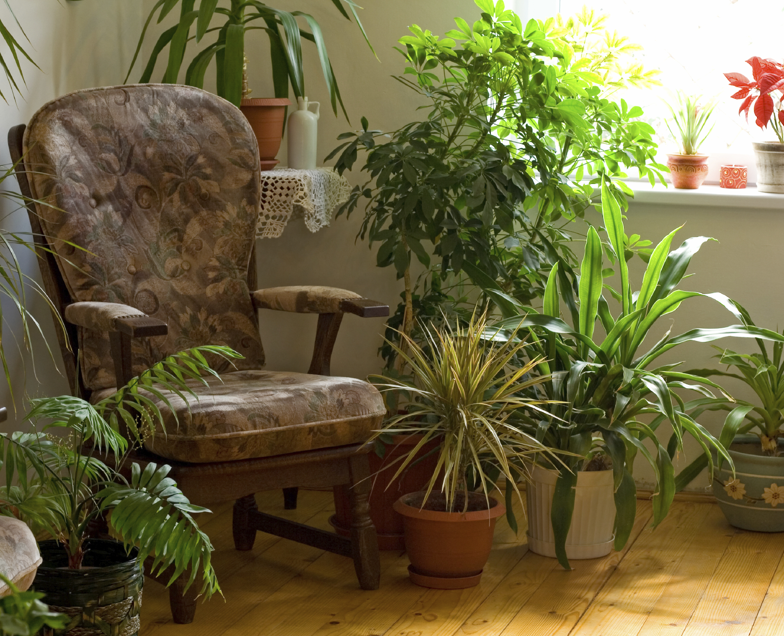 houseplants to purify indoor home air