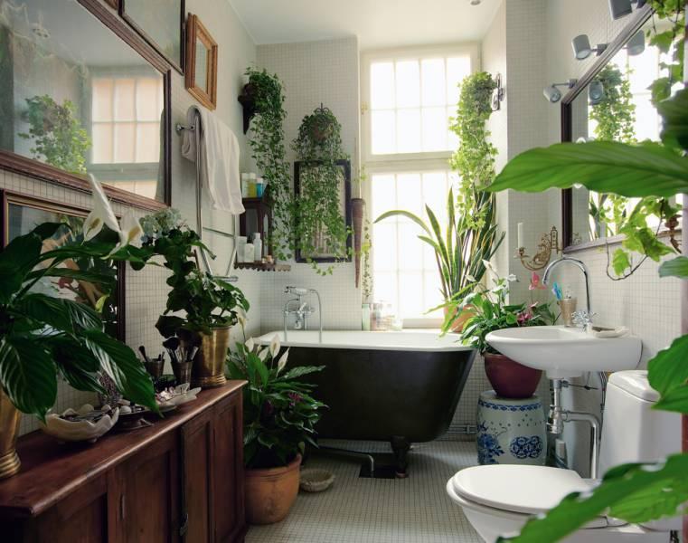 Bathroom green plants