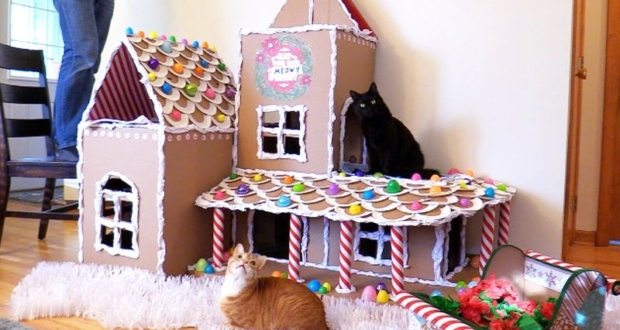 Cole and Marmalad cathouse