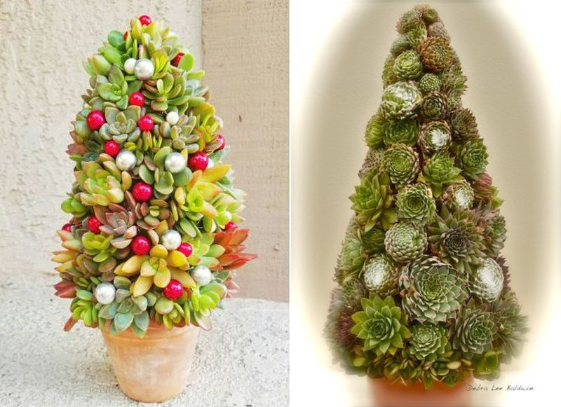 Succulent Christmas tree