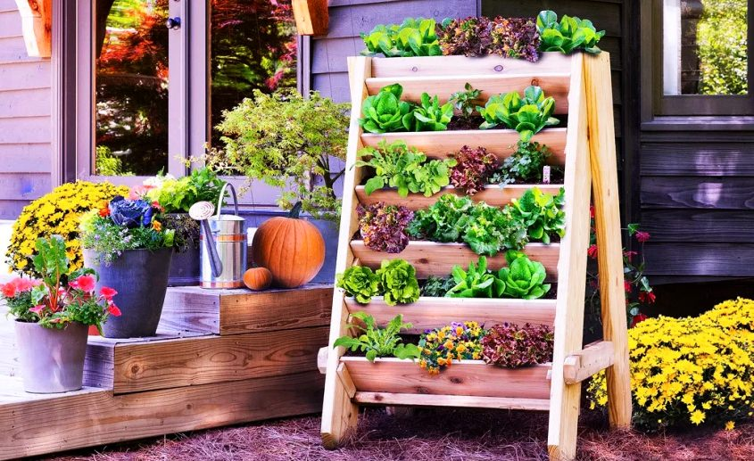 Attrayant Budget Gardening Ideas To Grow Veggies And Herbs In Winters