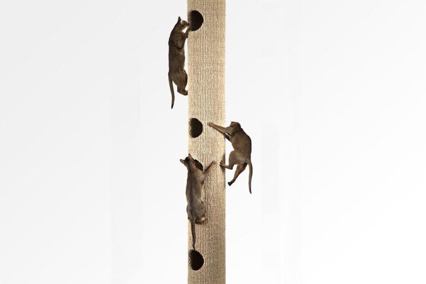 Catapilla Modular cat Tree From Hicat London