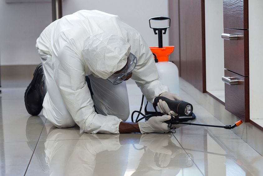 How to control pest infestation