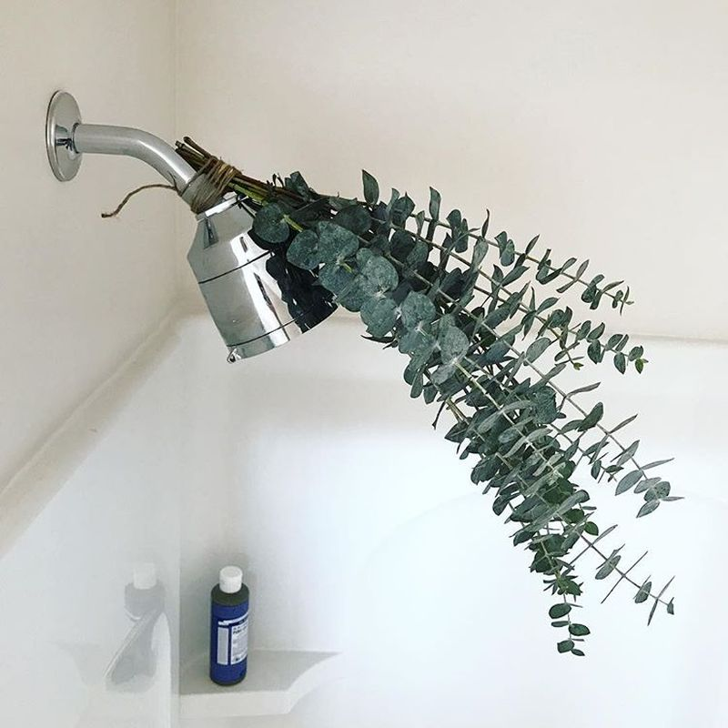 What is Eucalyptus Shower and Why it is a Hot Topic These Days