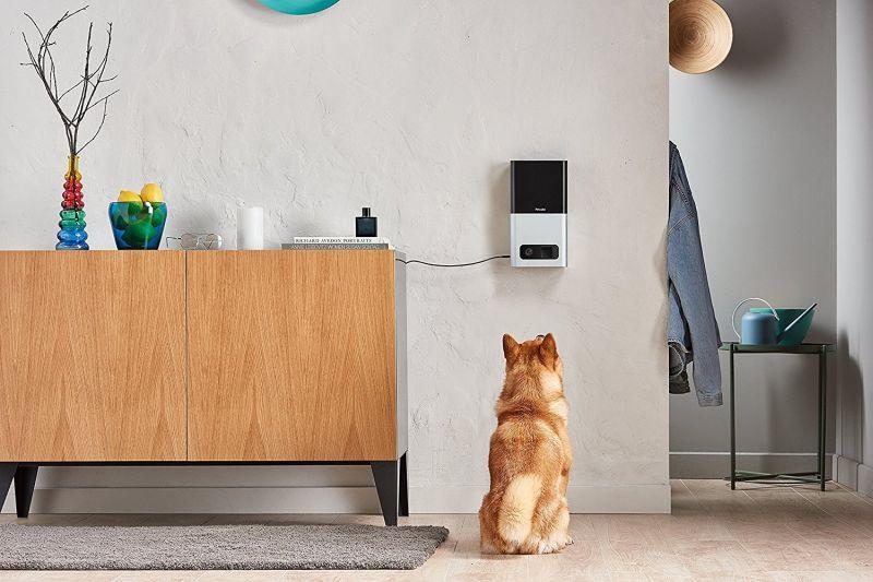 Petcube Bites treats dispenser