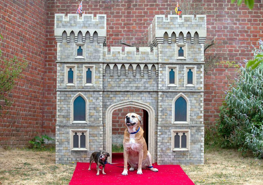 Windsor Castle dog house by Susan Crossland